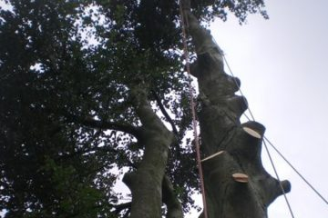 Tree Removal / Felling