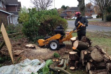 Stump Grinding - Removal