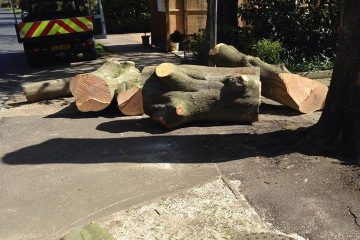 Complete Tree Removal/Tree Felling