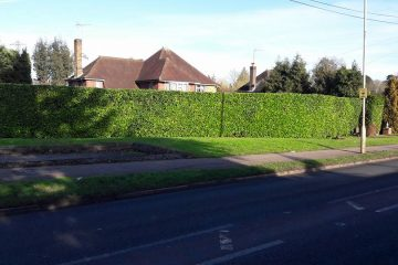 Professional Hedge Service